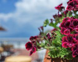 hotel_jaccarino_hotel_a_sant_agata_sui_due_golfi_massa_lubrense_sorrento_foto_terrazza_f